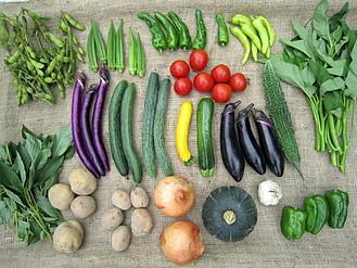 夏の有機野菜