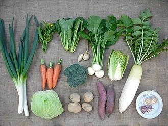 冬の有機野菜