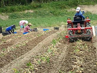 農場での有機野菜栽培の様子